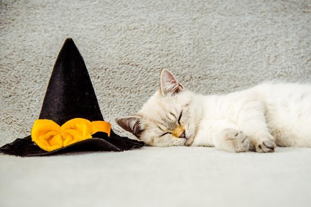 Um gatinho de um gato da raça britânica para o dia das bruxas ou ação de graças dormindo em um chapéu preto
