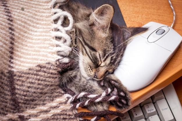 Um gatinho dormindo perto do computador, colocando a cabeça em um mouse de computador