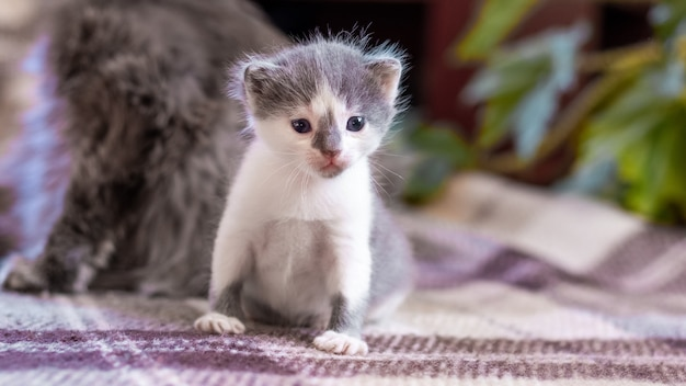 Um gatinho está sentado em uma sala ao lado de sua gata