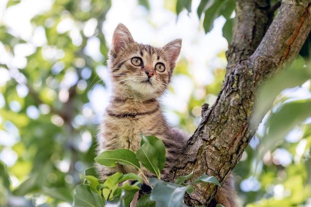 Um gatinho fofo em uma árvore entre as folhas verdes olha atentamente para longe