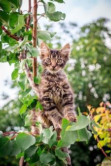 Um gatinho listrado pequeno com um olhar atento senta-se em uma árvore