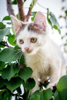 Um gatinho malhado branco senta-se em uma árvore em uma folha grossa