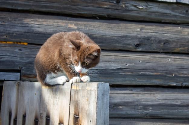 Um gatinho marrom está sentado na porta de madeira de uma casa de madeira na rua. um gatinho chamado busia. o gatinho está sendo brincado