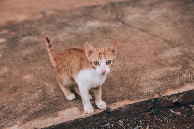 Um gatinho perdido sentado em uma passarela