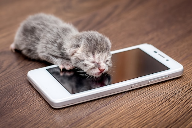 Um gatinho recém-nascido cinzento perto do telefone móvel. o bebê está ligando para a mãe. maly aprende sobre a tecnologia moderna, se familiariza com o telefone móvel_