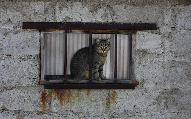 Um gato atrás de uma grade enferrujada contra uma parede cinza