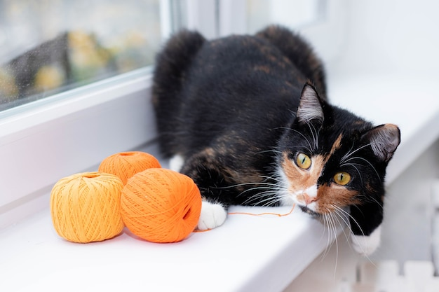 Um gato brinca com uma bola de linha