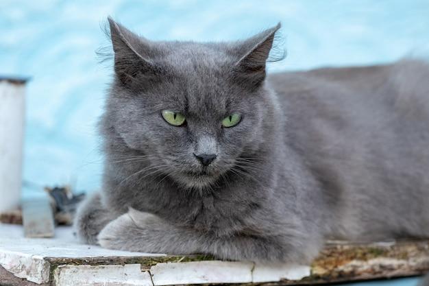 Um gato cinza com olhos verdes deitado em um banco