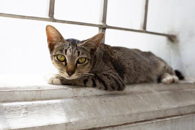 Um gato cinza na parede de cimento.
