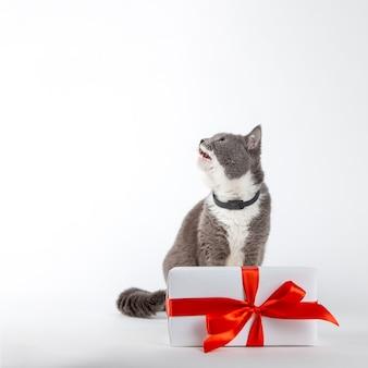 Um gato cinza senta-se perto de um presente com fita vermelha em branco.