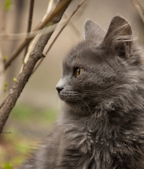 Um gato cinzento bonito brincando no quintal