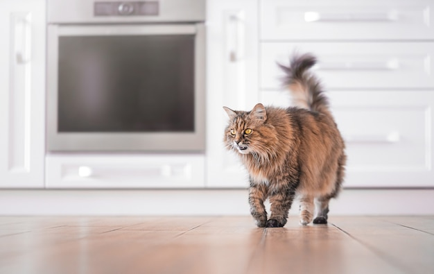 Um gato com olhos amarelos no fundo da cozinha.