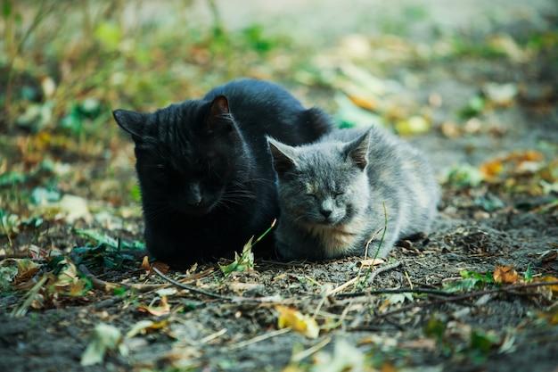 Um gato com um gatinho sentado nas folhas caídas.