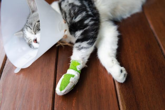 Um gato com uma perna quebrada usando uma coleira elizabetana para se proteger, lambendo a tala, dorme no chão de madeira