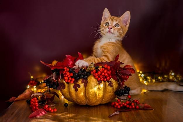 Um gato de halloween se senta em um balde de abóbora para doces. slill life com abóbora. foto de alta qualidade