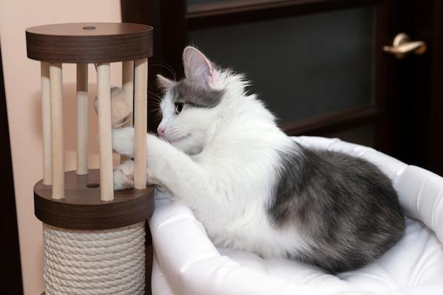 Um gato de olhos verdes está deitado em sua casinha branca e brincando com o brinquedo