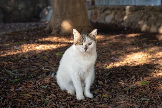 Um gato de rua está descansando no parque da cidade de alanya, na turquia
