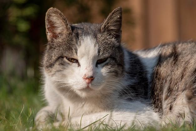 Um gato de rua manchado de branco senta-se em uma cerca. gato, caminhada, rua, primavera. primavera em gatos.