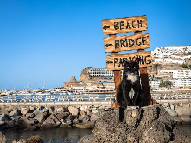Um gato de rua posando em um tronco de árvore na frente de uma placa apontando para a praia em porto rico, gran canaria na espanha
