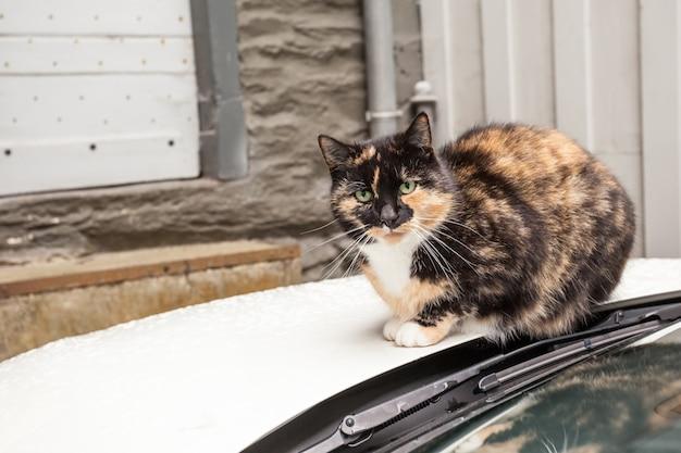 Um gato de rua