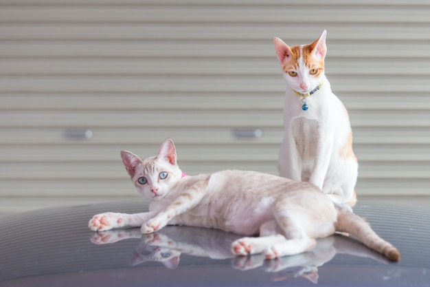 Um gato deitado e um gato sentado no teto do carro na garagem