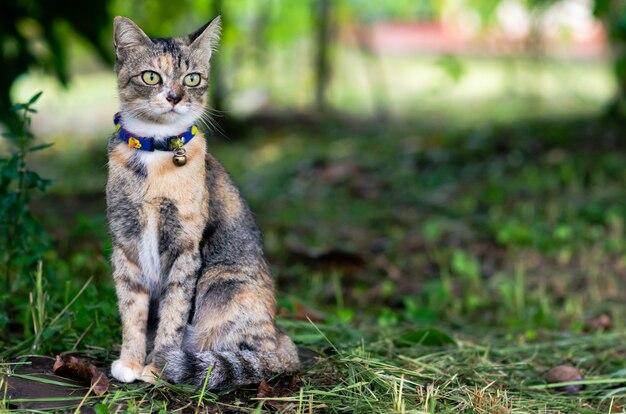 Um gato doméstico adorável com a cor do leopardo que senta-se na grama desarrumada.