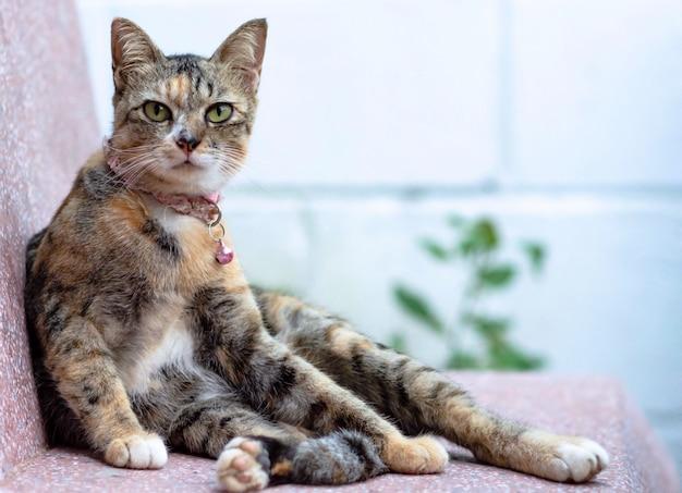 Um gato doméstico adorável com a cor do leopardo que senta-se no assento de mármore.