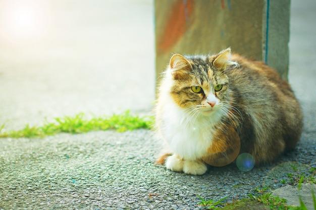 Um gato doméstico fofo cinzento marrom branco fofo no exterior ou parque, foto tonificada
