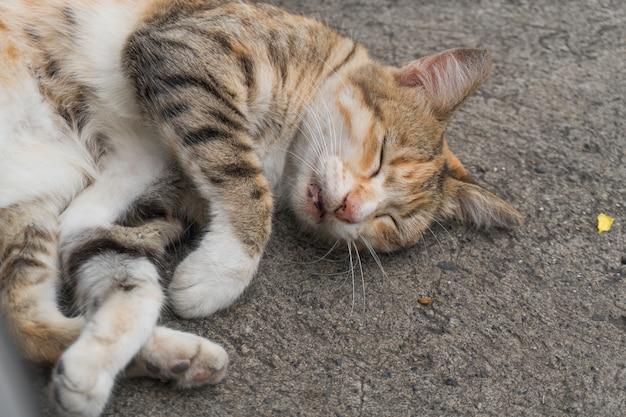 Um gato dormindo