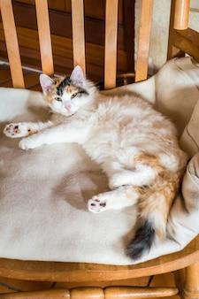 Um gato em uma cadeira de madeira