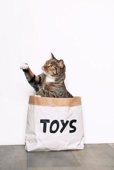 Um gato engraçado senta-se em um saco de papel kraft com os brinquedos de inscrição e brincando com uma pata.