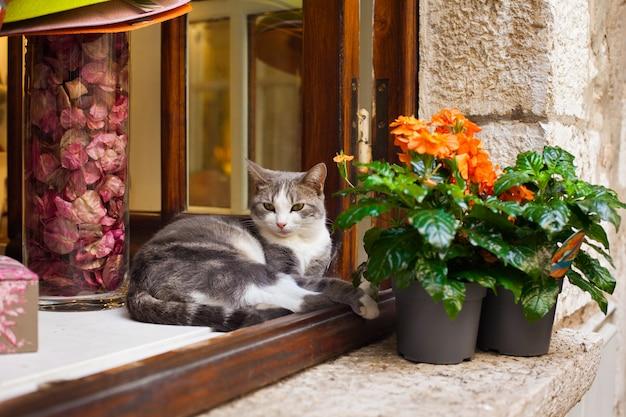 Um gato está deitado em uma janela perto de uma flor em uma panela na aldeia de saint-paul-de-vence, no sul da frança