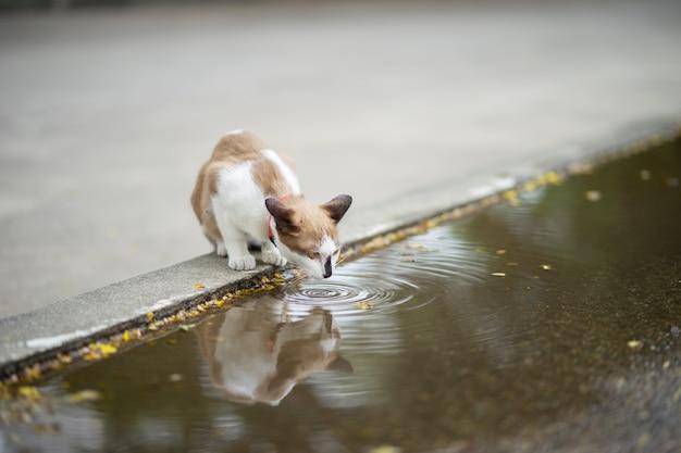 Um gato está sentado no jardim. ele é tão fofo. ele está bebendo água no chão.