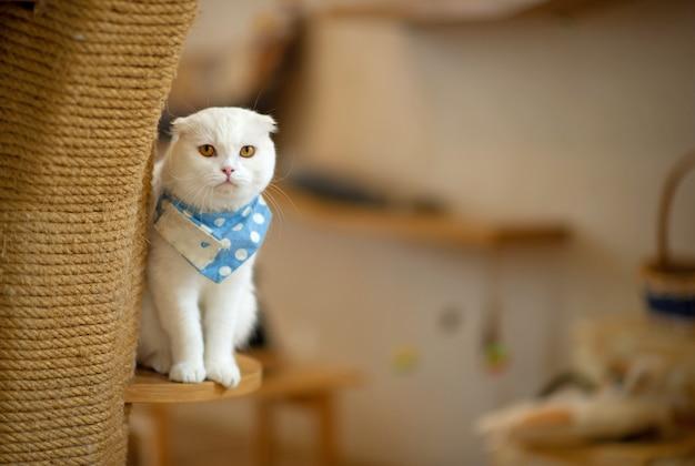 Um gato fofo está na casa de um gato.