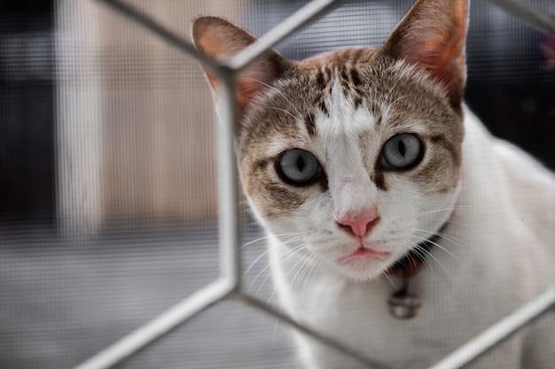 Um gato fofo olhou com desconfiança e olhando através da cerca da casa,