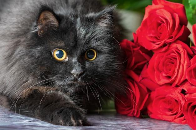 Um gato fofo preto com rosas vermelhas.