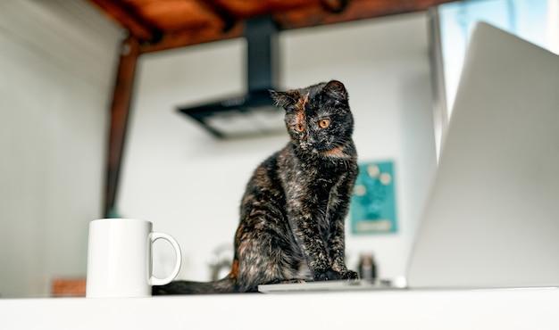 Um gato fofo se senta em uma mesa e trabalha em um laptop, uma xícara de café está perto. assistente de trabalho engraçado.