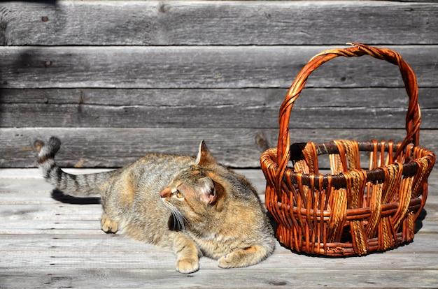 Um, gato grosso, é, localizado, perto, um, vazio, cesta vime, mentiras, ligado, um, madeira, superfície