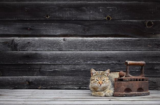 Um gato grosso está localizado ao lado de um ferro de carvão velho e enferrujado em uma superfície de madeira