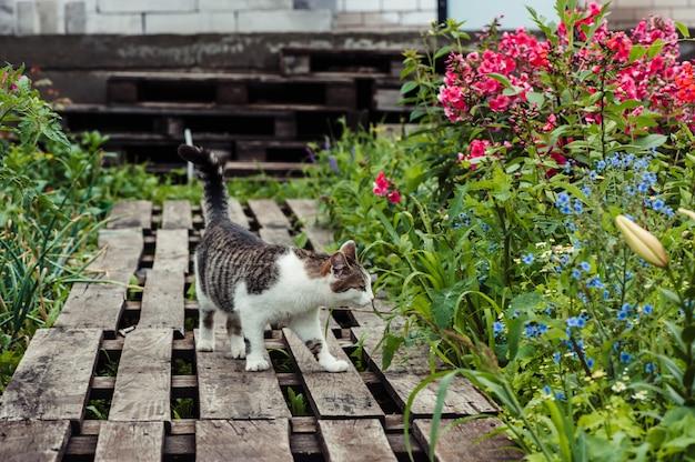 Um gato listrado cinza caminha por um caminho feito de paletes de madeira no jardim.