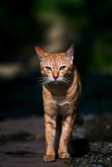 Um gato malhado de rua caminhando sozinho