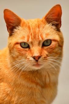 Um gato malhado