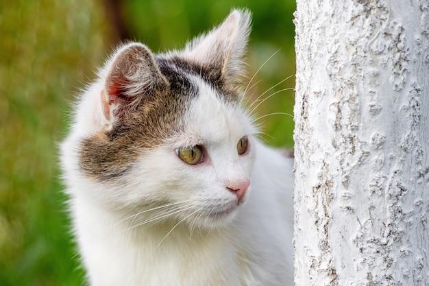 Um gato manchado de branco olha por trás de uma árvore