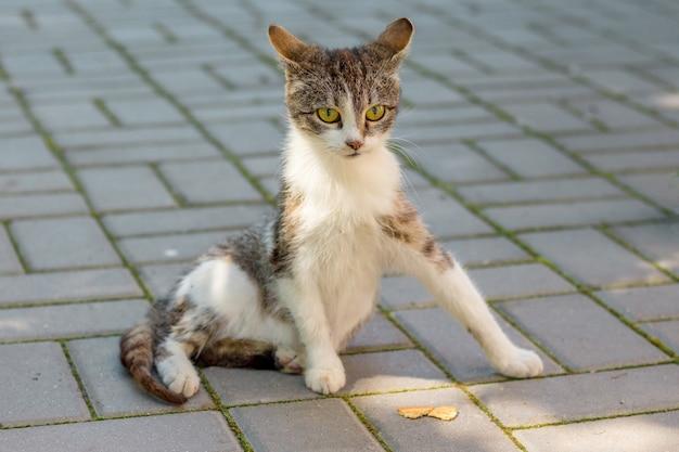 Um gato manchado de branco sentado em uma telha de calçada_