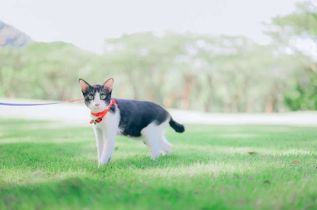 Um gato na coleira caminhando em um parque