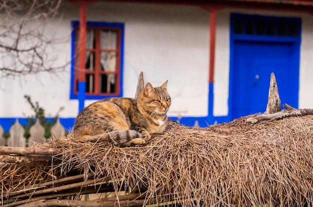 Um gato perto de uma casa na vila