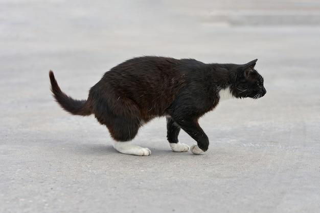Um gato preto com manchas brancas caminha na grama verde