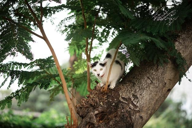Um gato preto e branco está sentado em uma árvore