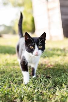 Um gato preto e branco no fundo da grama verde