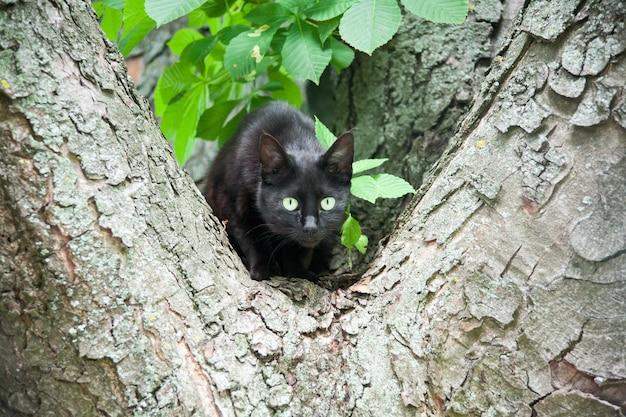 Um gato preto em uma árvore
